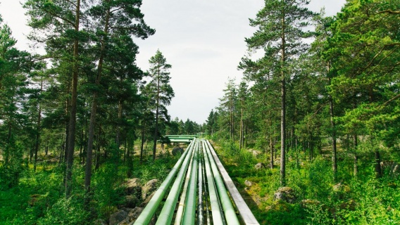 Bioproducts from Intelligent Tall Oil Technology NEXPINUS by Neste Engineering Solutions.